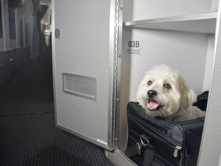 Southwest emotional support animal dog cat policy